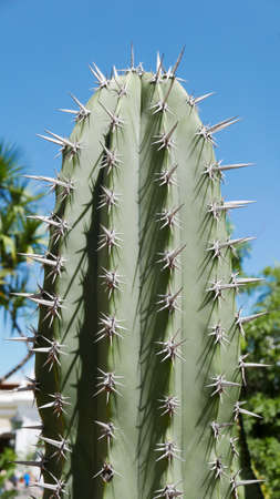 Top of a cactus plant against a bright blue sky
