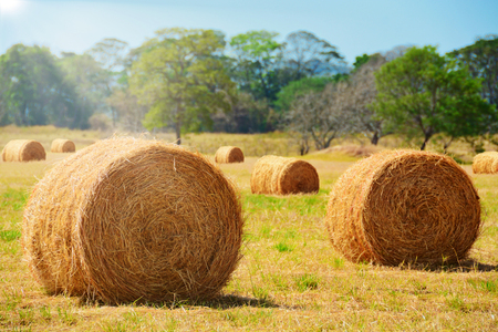 Close up of hay bales on a pasture field with the sun shining in the background