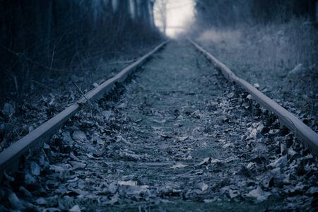 forest railroad: Railwayrails in the high forest alley - winter sunset time