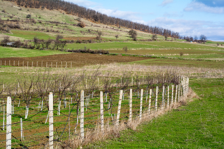 meanders: Garden with fruit trees enclosed by concrete stakes