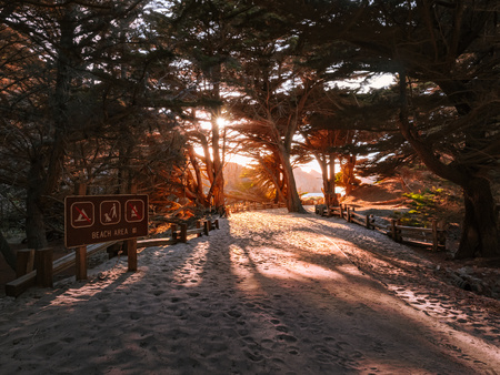 Entrance to Pfeiffer Beach near Big Sur, California. Sunburst through branches during the late afternoon sunset as cypress trees cast shadows on the sand. Beach Area sign at the bottom left side.