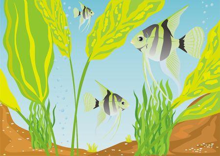 Una variedad de peces de acuario. Peces de acuario en su h�bitat natural. Foto de archivo - 7012398