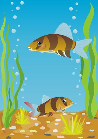 A variety of aquarium fish. Aquarium fishes in their natural habitat. Stock Photo - 7012400
