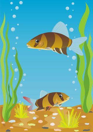 A variety of aquarium fish. Aquarium fishes in their natural habitat. photo