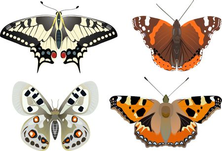 apollo: Swallowtail, Admiral, Apollo, Urticaria-species of butterflies Stock Photo