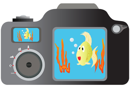 snapshot: Camera on a monitor which displays a snapshot of the fish in their habitat