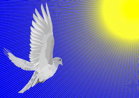 wingspan: A dove flies toward the sun