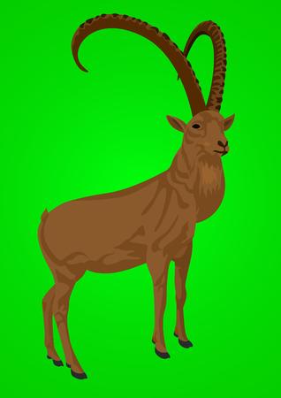 mountainous: Wild herbivorous animals live in mountainous areas. Animal on a green background. Illustration