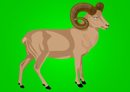 mountainous: Mountain sheep inhabiting mountainous areas. Animal on a green background. Illustration