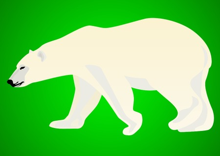beest: Polar bear-predatory animals live in the Arctic. Animal on a green background.