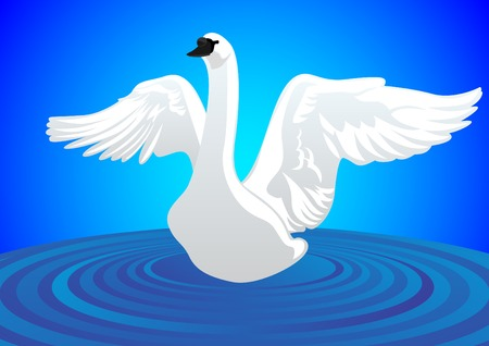 White Swan with my wings against the water surface Vector