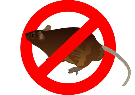 banning: Rat on the background of a circular banning the signs