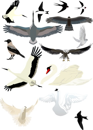 Collection of different birds for the design of your illustrations Vector