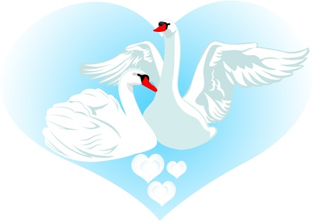 swans: Two white swans on a background of abstract images of the heart