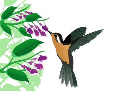 A little bird-drinking nectar from flowers Stock Vector - 9345160