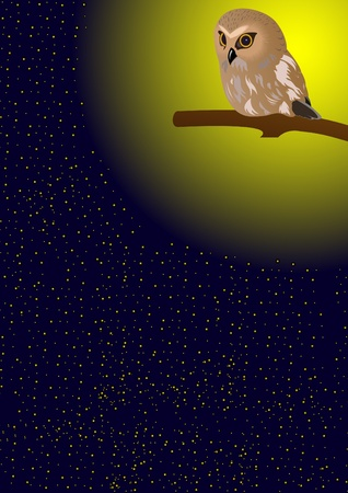 nocturnal: Nocturnal bird of prey sitting on a branch in the night sky. Illustration