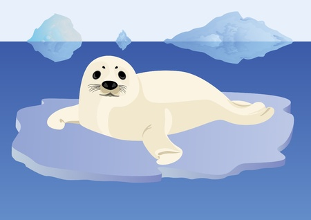 floe: A young seal lying on ice floe in the middle of the ocean Illustration