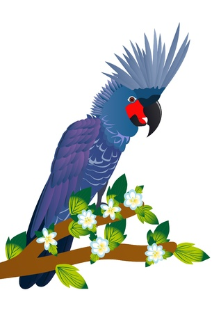 Exotic birds. A parrot sits on a tree branch with a blossoming flower. Stock Vector - 9404252