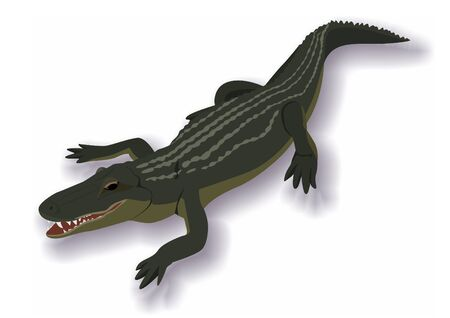 frightening: Illustration on the theme of wildlife. Crocodile frightening and dangerous predator. Illustration