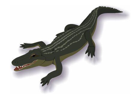 przerażający: Illustration on the theme of wildlife. Crocodile frightening and dangerous predator. Ilustracja
