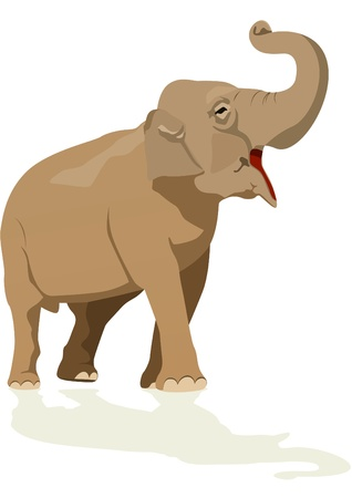 herbivore: Elephant - the largest representative of wildlife on earth.