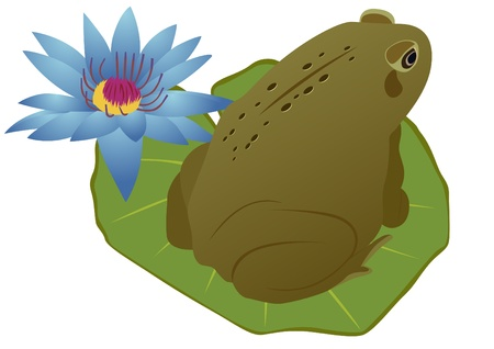 Green frog sitting on a sheet near the lotus flower. Stock Vector - 9612517