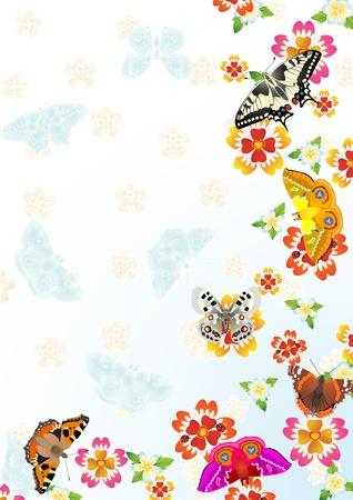 papillon dessin: R�sum� de fond l'�t�. Pr�s des papillons fleurs.