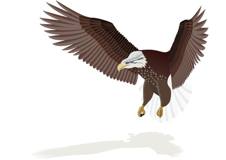 Flying eagle with outstretched wings. The illustration on white background.