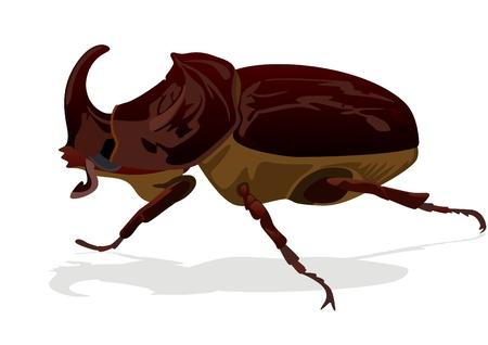 chitin: Illustration depicting a rhinoceros beetle on white background Illustration
