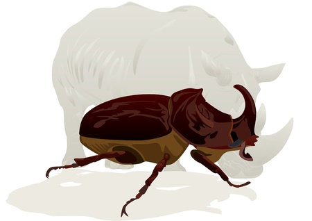 Illustration depicting a rhinoceros and rhino beetle on white background Vector