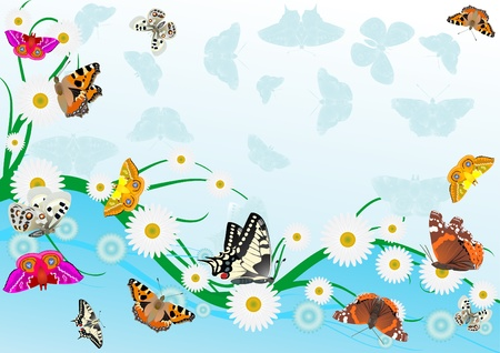 Abstract summer background of flowers, over which the butterflies. Vector