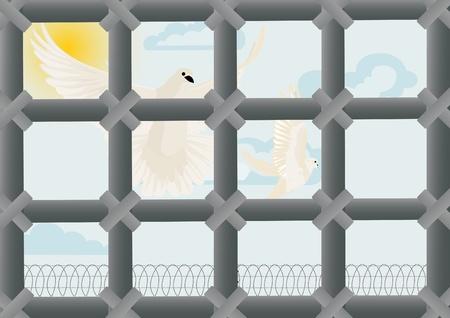 ligotage: Voler des colombes blanches sur un ciel bleu. Vue � travers les barreaux d'une prison