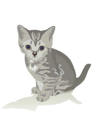 A small gray kitten sits on the floor. The illustration on white background.