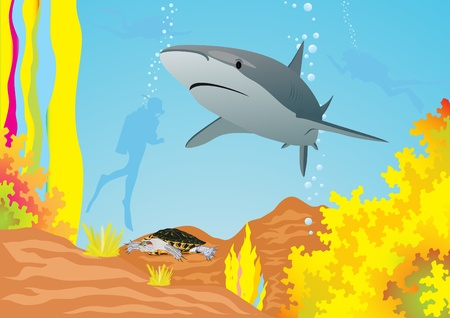 occupant: Underwater landscape. The shark swims in the sea, divers swim away