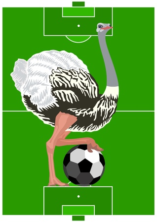 Ostrich with a soccer ball against the background of a football field. Vector