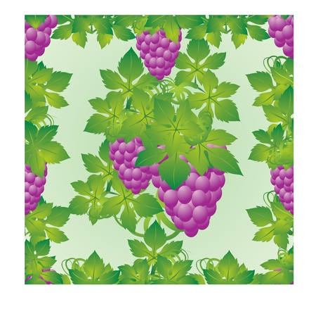 The leaves and grapes on a green background Vector