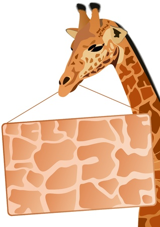 Giraffe - the tallest animal. Part of the animal. Giraffe holding the object on which you can place your text. Stock Vector - 10475648