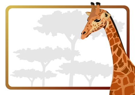Body Part on the background of a giraffe tree. The illustration on white background. Vector