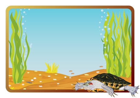 Marine life on background frame with the underwater scenery. Vector