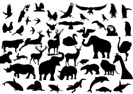 Imágenes del contorno de la fauna en el planeta Tierra