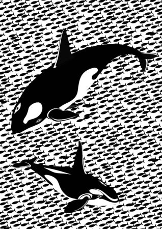 Two killer whales against the schools of fish. Black and white illustration. Vector