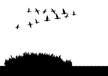 gęsi: Ilustracja kontur. Stado dzikich kaczek lecÄ…cych nad jeziorem. Czarno-biaÅ'a ilustracja.