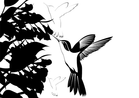 Hummingbirds around flowers. Black and white illustration. Vector