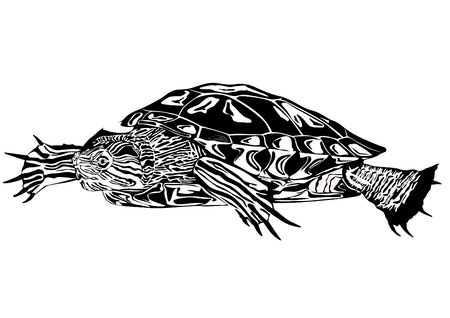 line drawings: Black and white illustration depicting a turtle on a white background.