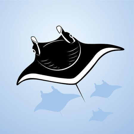 stingrays: The underwater world. Stingrays swim in the sea