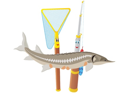 sturgeon: Abstract fishing rod and net holding sturgeon. The illustration on a white background.