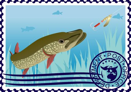 pike: The illustration on a postage stamp  Pike in their natural habitat  Fishing for pike on the lure