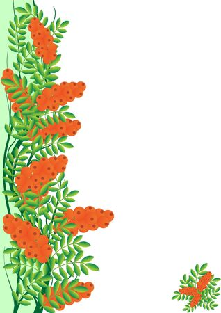 Branch with berries of sea buckthorn. The illustration on a white background. Stock Vector - 13569288