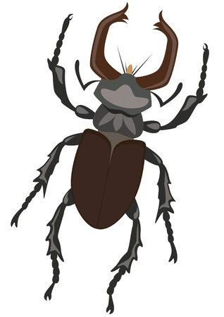 Stag Beetle. The illustration on a white background Stock Vector - 13916522