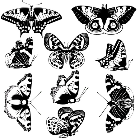 admiral: The contours of butterflies  Black and white illustration